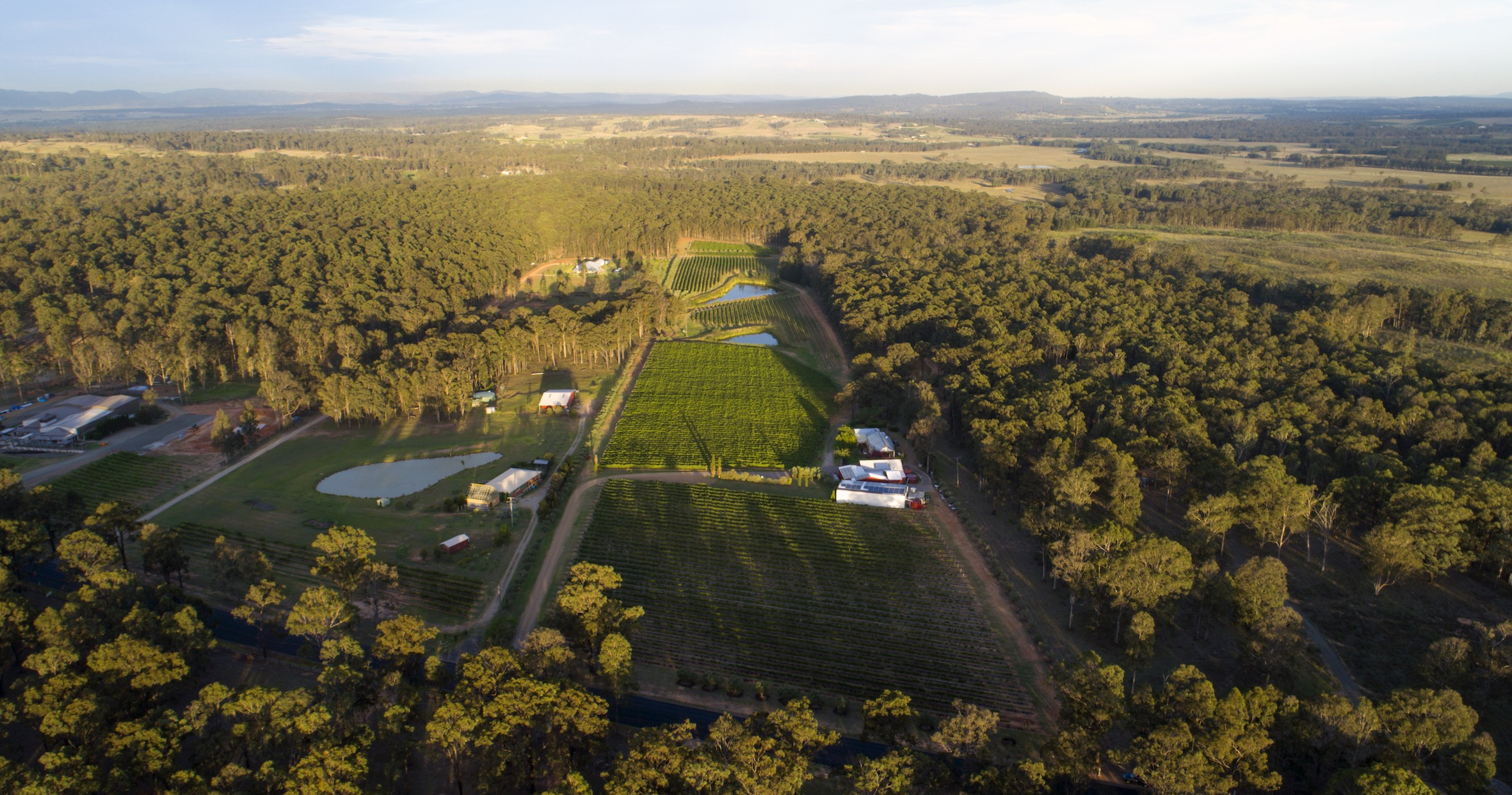 Drone view front Tintilla Estate Vineyard